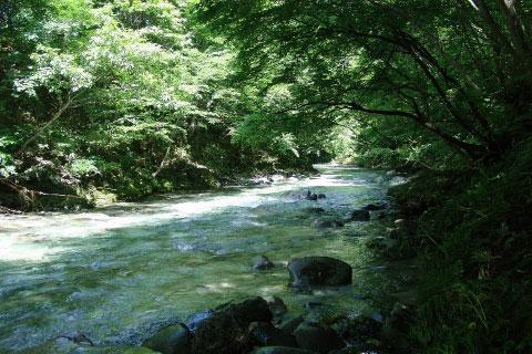 鱒沢渓谷(ますざわけいこく)